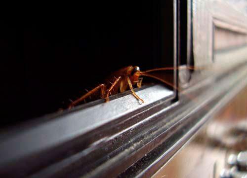 причина появления тараканов
