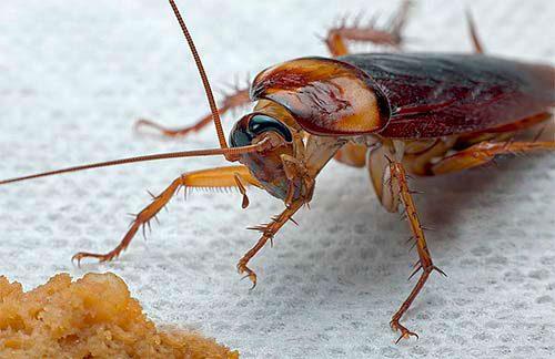 лакомство для таракана