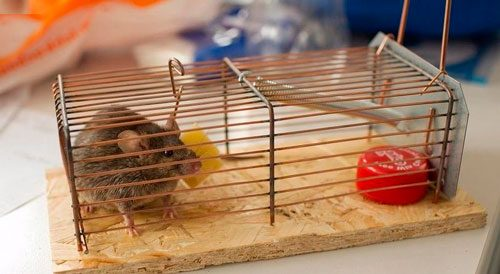 клетка от мышей