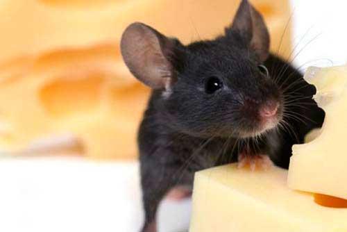 Как можно поймать мышь