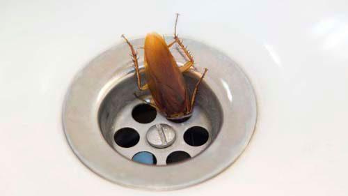 тараканы любят воду