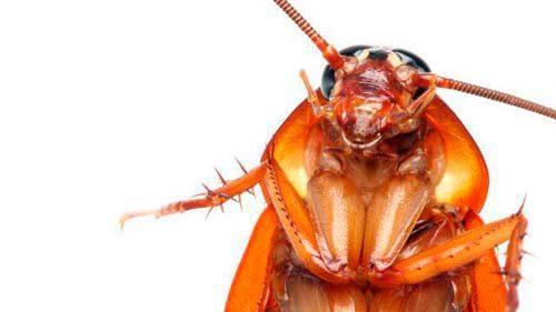 может ли таракан укусить
