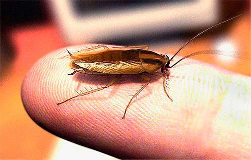 как предотврартить укусы тараканов