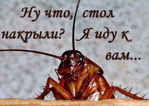тараканы пришли от соседей