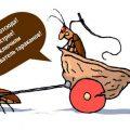 Эффективен ли ультразвук от тараканов