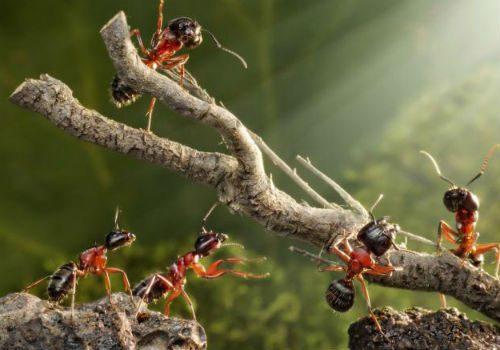 раствор от муравьев на деревьях