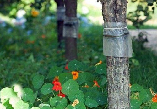 фольга на деревьях