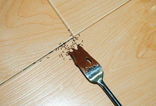 муравьи из-за грязной посуды