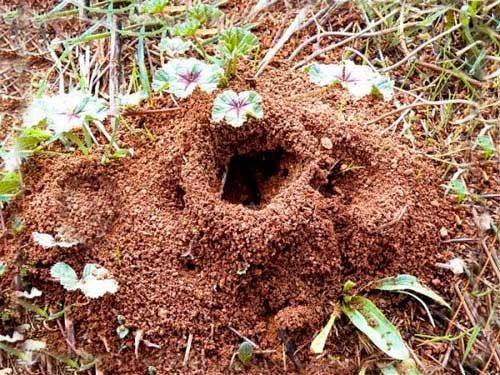 разрушить муравейник