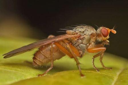 Вредитель огородов насекомые