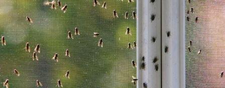 Как избавиться от мух на улице