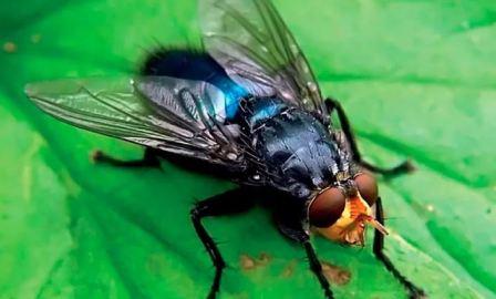 Избавиться от мух в домашних условиях