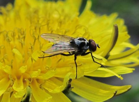 Средство от мух в доме