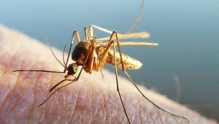 Чего боятся комары, что их отпугивает