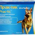 Лучшие химические и народные средства от блох для собак