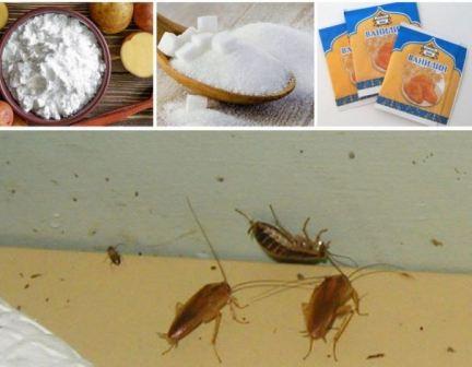 Народное средство от тараканов самое