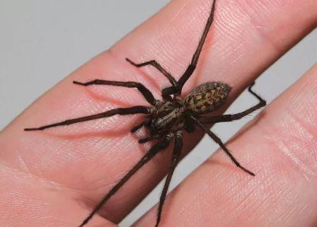 Откуда берутся пауки в квартире и доме