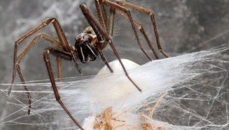 Домашние пауки название
