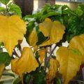 Кто вредит комнатным растениям