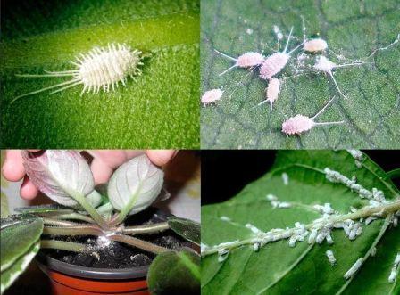 Вредители комнатных растений и меры