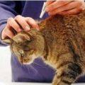 Адвокат для взрослых котов и кошек