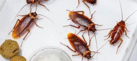 Средство от тараканов самое эффективное