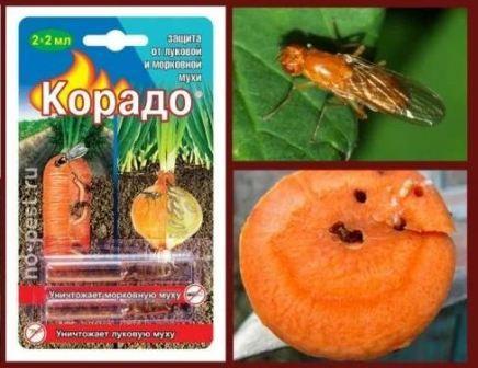 Морковная, луковая муха