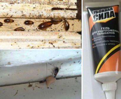 Дохлокс: гель от тараканов