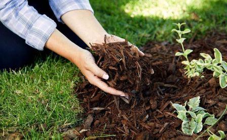 Ростковая муха: как избавиться