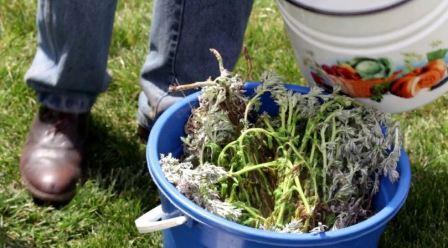 Совки вредители растений