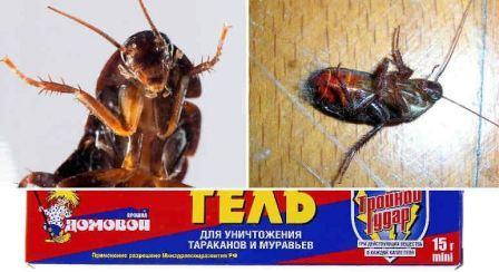 Домовой Прошка от тараканов
