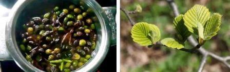 Паутинные клещи на комнатных растениях: как бороться