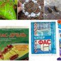 Фас-порошок от тараканов – доступное средство в двух вариантах