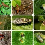 Основные вредители сада, какие насекомые опасны для деревьев и плодов