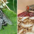 Недоброжелательное соседство или мухи, которые кусаются