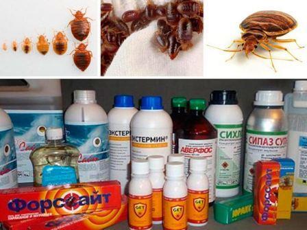 Методы уничтожения клопов, препараты