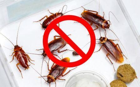 Методы потравки и уничтожения тараканов