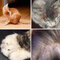 Как вывести блох у кота, все способы и средства