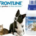Фронтлайн от блох и клещей для кошек и собак