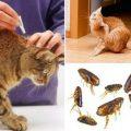 Как в домашних условиях вывести блох у кошки, чем обработать