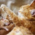 Можно ли кормящую кошку обработать от блох