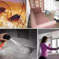 Чем обрабатывать квартиру от блох
