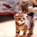 Народные средства от блох у котенка в домашних условиях