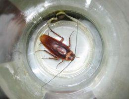 как сделать ловушку для тараканов
