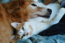 Опасны ли кошачьи и собачьи блохи для человека
